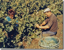 Vendanges 1970 - Georges et Nadia